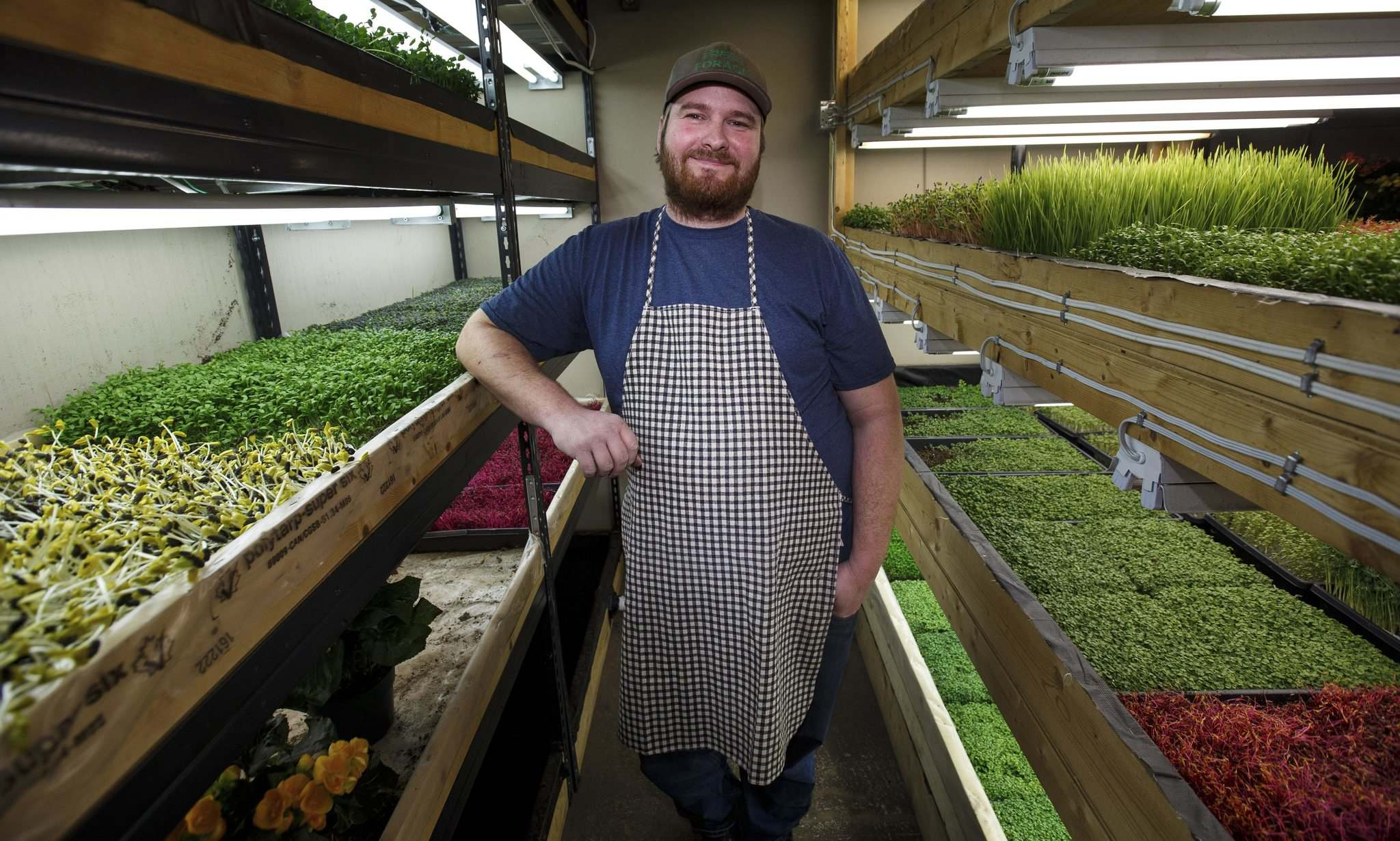 Microgreens gaining macro reach